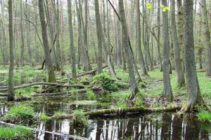 Nationalpark Kampinos